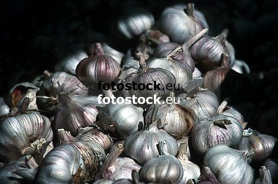 garlic<br /> <br /> ajo<br /> <br /> Knoblauch<br /> <br /> bot.: Allium Sativum<br /> <br /> Original: 35 mm slide transparency