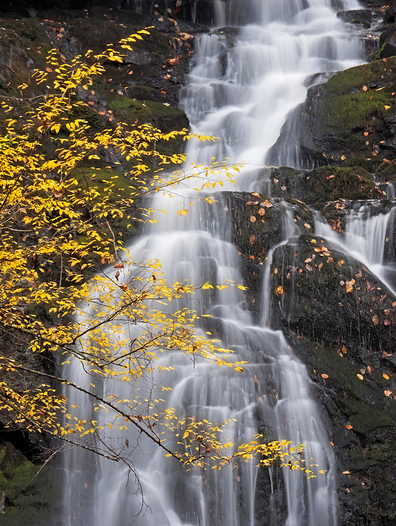 Autumn leaves rest in front of Spruce Flat Falls on the Honey Cove Branch near Tremont in the Great Smoky Mountains National Park in Tennessee, USA