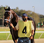 February 6, 2021: #4 MILLEAN and Jockey Roberto Alvarado Jr. run in the Sam F Davis for Trainer Todd Pletcher and Donegal Racing at Tampa Bay Downs in Oldsmar, Florida on February 6, 2021. Delikat/Eclipse Sportswire/CSM