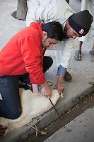 Man Prepares to Sacrifice a Ram in Thanks for Business Success, Madrasa Imdadul Uloom, Dehradun, India.