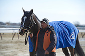 Tom Fool - Strapping Groom