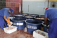 Campinas (SP), 31/03/2021 - Policia - A Policia Civil e o Servico de Inspecao de Produtos de Origem Animal encontraram na tarde desta quarta-feira (31) grande quantidade de carne seca, fabricada irregularmente em uma residencia, no Jd Montreal na cidade de Campinas, interior de Sao Paulo. (Foto: Denny Cesare/Codigo 19/Codigo 19)