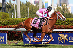 HALLANDALE BEACH, FL - FEBRUARY 27:   Catch a Glimpse #8 with jockey Florent Geroux on board wins the 33rd running of the Herecomesthebride G3 at Gulfstream Park on February 27, 2016 in Hallandale Beach, Florida. (Photo by Liz Lamont)