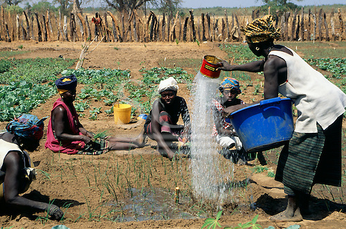The Gambia. Woman working in a vegetable garden watering crops while other woman plant seedlings - food for tourists.