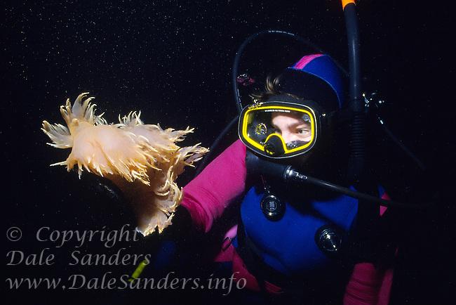Scuba Diver and Giant Nudibranch (dendronotis iris) underwater in British Columbia, Canada.