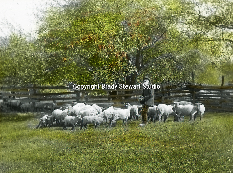 Jerome ID:  Sheepherder feeding the flock.  Brady Stewart and three friends went to Idaho on a lark from 1909 thru early 1912.  As part of the Mondell Homestead Act, they received a grant of 160 acres north of the Snake River.  Brady Stewart photographed the adventures of farming along with the spectacular landscapes. To give family and friends a better feel for the adventure, he hand-color black and white negatives into full-color 3x4 lantern slides.  The Process:  He contacted a negative with another negative to create a positive slide.  He then selected a fine brush and colors and meticulously created full-color slides.