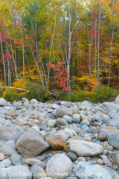 Autumn foliage along the riverbank of the East Branch of the Pemigewasset River in Lincoln, New Hampshire during the autumn months. This location is just above the site of the old 1900s Gravity Dam that was linked to the Lincoln Mill era.