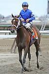 Alpha (no. 7), ridden by Ramon Dominguez and trained by Kiaran McLaughlin, wins the 132nd running of the grade 3 Withers Stakes for three year olds on February 04, 2012 at Aqueduct Race Track in Ozone Park, New York.  (Bob Mayberger/Eclipse Sportswire)