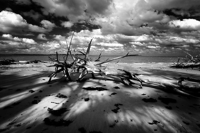 Driftwood splits the late afternoon sun on Florida's barrier islands.