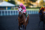 Broken Sword ridden by Joel Rosario wins the Bayakoa Stakes on December 07, 2013 at Betfair Hollywood Park in Inglewood, California .(Alex Evers/ Eclipse Sportswire)