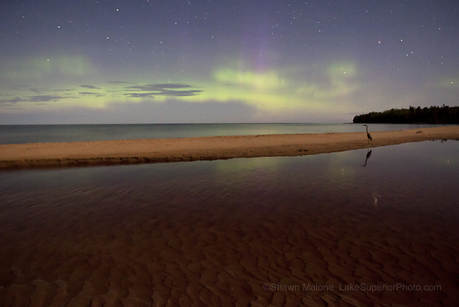 A blue heron out for a midnight stroll along Sand River, Lake Superior, MI with the aurora borealis northern lights providing ambient light :)