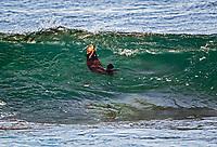 Southern sea otter or California sea otter, Enhydra lutris nereis, eating while riding the wave, Monterey Bay National Marine Sanctuary, Monterey, California, USA, Pacific Ocean