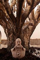 Drachenbaum im Rathaushof von Galdar, Gran Canaria, Kanarische Inseln, Spanien