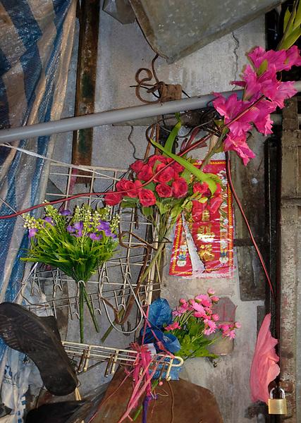 Hongkong, China, Asien, urbane Flora<br />  ***Keine Social_Media Nutzung***<br /> <br /> Engl.: Asia, China, Hong Kong, urban flora, plant, flowers<br /> ***No social media use***