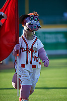 Lansing Lugnuts Mascot Big Lug before a Midwest League game against the Burlington Bees on July 18, 2019 at Cooley Law School Stadium in Lansing, Michigan.  Lansing defeated Burlington 5-4.  (Mike Janes/Four Seam Images)