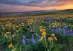 Washington - State Parks