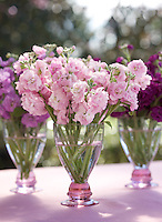Bouquets of stocks in varying shades of pink and violet are displayed in three matching glass vases