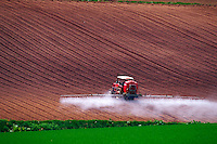 Irrigating lavender fields