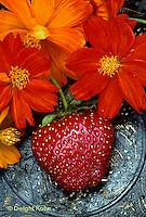ST04-015c  Strawberries with bright lights cosmos - Honeyoke variety