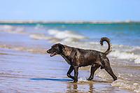 A stray dog bathes in the water on the beach in Estero Las Jaibas located on the tip of the Kino Peninsula in Bahia de Kino, Sonora Mexico. (Photo: Luis Gutierrez / NortePhoto.com) ..<br /> Landscape, sea, beach, tourist destination, travel, Gulf of California, northwest, calm, horizon. The Sea of Cortes or Red Sea that is located between the Baja California peninsula. tourist destination, mainland.<br /> Un perro callejero se baña en el agua de la playa en el estero las jaibas un bicado en la punta peninsula Kino en bahia de Kino, Sonora Mexico. (Photo: Luis Gutierrez / NortePhoto.com)..<br /> Paisaje, mar, playa, destino turistico, viaje, Golfo de California, northwest, calma, horizonte. El Mar de Cortes o mar Bermejo que se encuentra entre la península de Baja California. destino turístico, tierra firme.