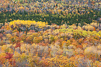 Autumn's hues create bands of color in this hardwood forest on the Keewenaw Peninsula, Michigan.