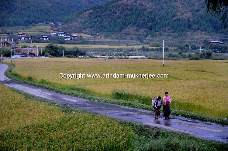 Rice fields at Paro valley. Arindam Mukherjee..