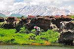 Tremors Spring Creek Patagonia