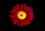 Bullsey image of daisy in planter box.