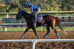 ARCADIA, CA  OCTOBER 26: Breeders' Cup Turf Sprint entrant Eddie Haskell, trained by Mark Glatt, exercises in preparation for the Breeders' Cup World Championships at Santa Anita Park in Arcadia, California on October 26, 2019. (Photo by Casey Phillips/Eclipse Sportswire/CSM)