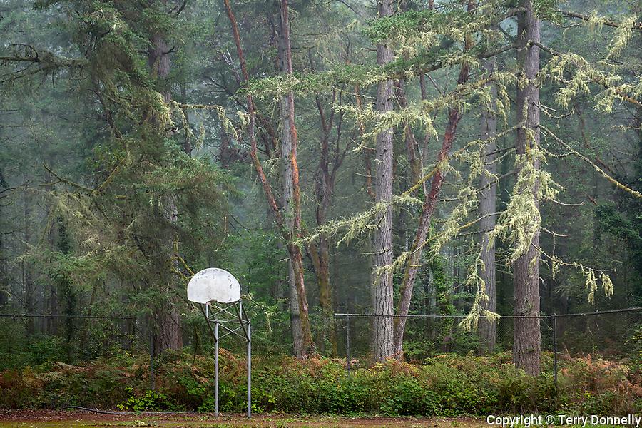 Vashon, Washington:<br /> Decaying basketball court and backstop at the forest edge, Sunrise Ridge