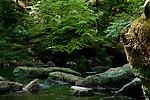 Europa, DEU, Deutschland, Rheinland Pfalz, Eifel, Suedeifel, Irrel, Naturpark Suedeifel, Irreler Wasserfaelle, Landschaft, Kategorien und Themen, Natur, Umwelt, Landschaft, Jahreszeiten, Stimmungen, Landschaftsfotografie, Landschaften, Landschaftsphoto, Landschaftsphotographie, Tourismus, Touristik, Touristisch, Touristisches, Urlaub, Reisen, Reisen, Ferien, Urlaubsreise, Freizeit, Reise, Reiseziele, Ferienziele<br /> <br /> [Fuer die Nutzung gelten die jeweils gueltigen Allgemeinen Liefer-und Geschaeftsbedingungen. Nutzung nur gegen Verwendungsmeldung und Nachweis. Download der AGB unter http://www.image-box.com oder werden auf Anfrage zugesendet. Freigabe ist vorher erforderlich. Jede Nutzung des Fotos ist honorarpflichtig gemaess derzeit gueltiger MFM Liste - Kontakt, Uwe Schmid-Fotografie, Duisburg, Tel. (+49).2065.677997, archiv@image-box.com, www.image-box.com]