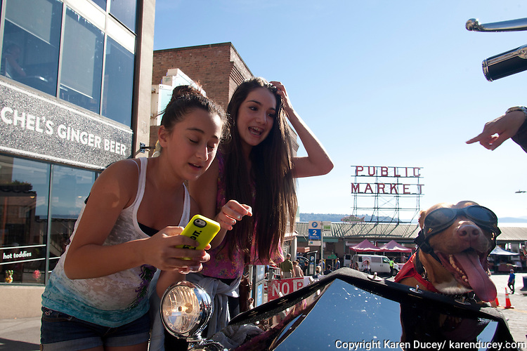 """Teenagers stop to take a """"selfie"""" next to Lucy, a six-year-old pit bull mix, at the Pike Place Market in Seattle, Washington. Lucy rides in a sidecar next to her mom, Brande Schweitzer, who drives a Harley-Davidson."""