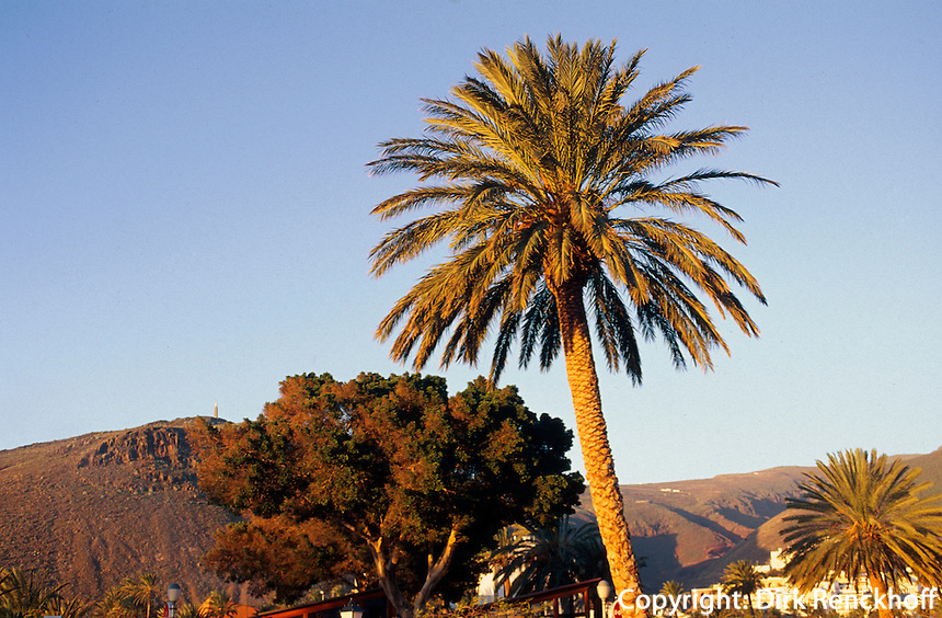 Spanien, Kanarische Inseln, Gomera, Palmem in San Sebastian