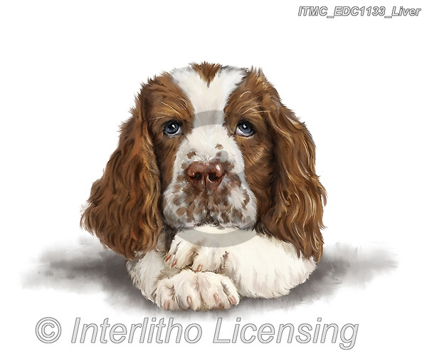 Marcello, REALISTIC ANIMALS, REALISTISCHE TIERE, ANIMALES REALISTICOS, paintings+++++,ITMCEDC1133/LIVER,#a#, EVERYDAY