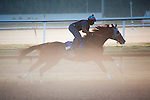 HALLANDALE BEACH, FL - JANUARY 21: California Chrome with exercise rider Dhigi Gladney put in their final work before the Pegasus World Cup at Gulfstream Park. (Photo by Arron Haggart/Eclipse Sportswire/Getty Images