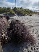 Dünenbefestigung am Nordstrand der Düne, Insel Helgoland, Schleswig-Holstein, Deutschland, Europa<br /> stabilisation of dune at northern beach, Helgoland island, district Pinneberg, Schleswig-Holstein, Germany, Europe