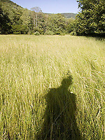 Person's shadow in tall grasses<br />