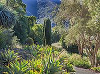 Summer-Dry garden; Leaning Pine Arboretum, San Luis Obispo, California