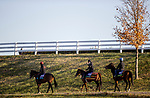 November 3, 2020: Tarnawa, Safe Voyage and Cadillac make their way to the track for the Breeders' Cup Turf at Keeneland Racetrack in Lexington, Kentucky on November 3, 2020. Alex Evers/Eclipse Sportswire/Breeders Cup