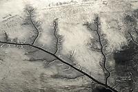4415/Priel: EUROPA, DEUTSCHLAND, HAMBURG,  22.01.2006 Ebbe im  Suesswasserwatt Muehlenberger Loch, Elbe, abgelaufenes Wasser,  Priel, maeandern, wie ein Baum, veraestelt,