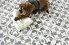 Charles the Chesapeake Bay Retriever gets cuddly on a New Ravenna Galata mosaic floor. Galata, a waterjet mosaic, shown in polished Dolomite and Allure, is part of the Miraflores collection by Paul Schatz for New Ravenna.