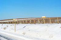 Tarcal in Tokaj: in the vineyard the famous yellow house owned by Hugh Johnson, a pioneer of the revival of Tokaj Credit Per Karlsson BKWine.com