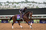 DEL MAR, CA - NOVEMBER 02: Itsinthepost, owned by Red Baron's Barn LLC and trained by Jeff Mullins, exercises in preparation for Longines Breeders' Cup Turf during morning workouts at Del Mar Thoroughbred Club on November 2, 2017 in Del Mar, California. (Photo by Michael McInally/Eclipse Sportswire/Breeders Cup)