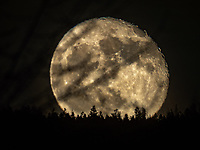 """These photographs of the Moon are for your viewing pleasure, and to bring glory to God, who is the creator of all the celestial objects in the sky. <br /> <br /> The Bible says:<br /> """"God made two great lights; the greater light to rule the day, and the lesser light to<br /> rule the night: he made the stars also. And God set them in the firmament of the<br /> heaven to give light upon the earth. <br /> (Genesis 1:16-17)<br /> <br /> Photographing the moon is a tricky process because the moon is continually changing its phase and the amount of light that it emits. The orbit of the moon around the earth is also very different to the sun. Sometimes the moon rises at night, and sometimes it rises in the morning, but moon always rises in the east and sets in the west."""