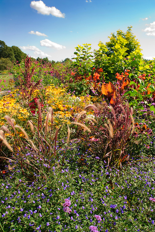 Perennial bed with pennisetum, Helianthus, Canna, and many types of different plants with blue sky at White Flower Farm