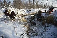 T.Israelson & team near the Cripple checkpoint during the 1992 Iditarod Sled Dog Race, Interior Alaska, Winter