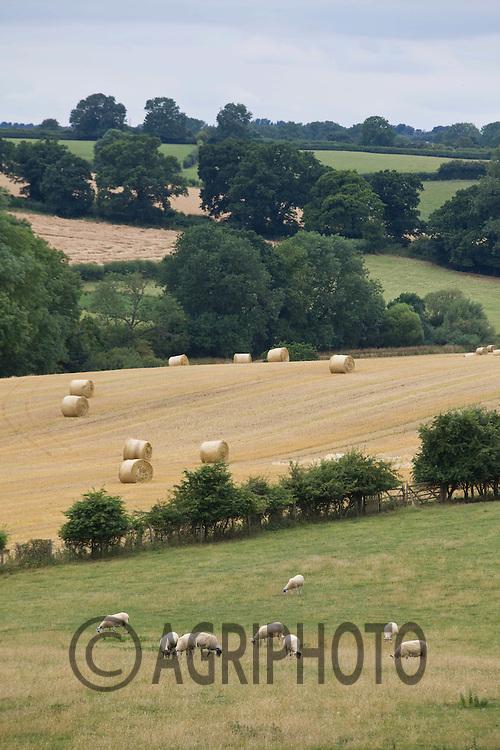 Rolling English Farmland