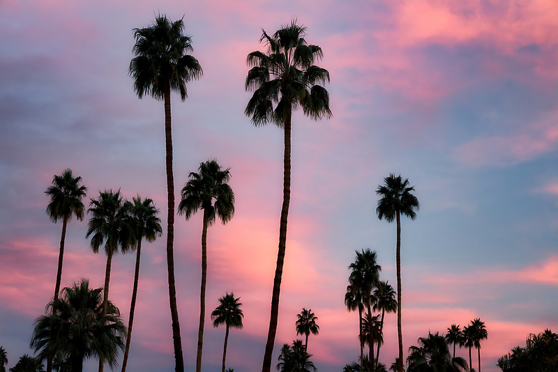 Palm trees and sunrise. Palm Springs, California