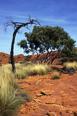 Northern Territory, Australia. Terrain typical to Red Centre with red rocky ground and dry vegetation.