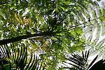 2007 Copyright  Whitney Lauren Robinson Stubbart / Lambi Arts Forest Canopy Photography Puerto Rico
